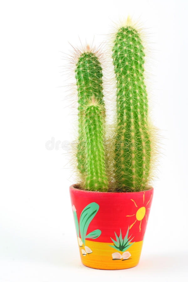 Cactus in a pot. Isolated cactus in a colorful pot stock photos