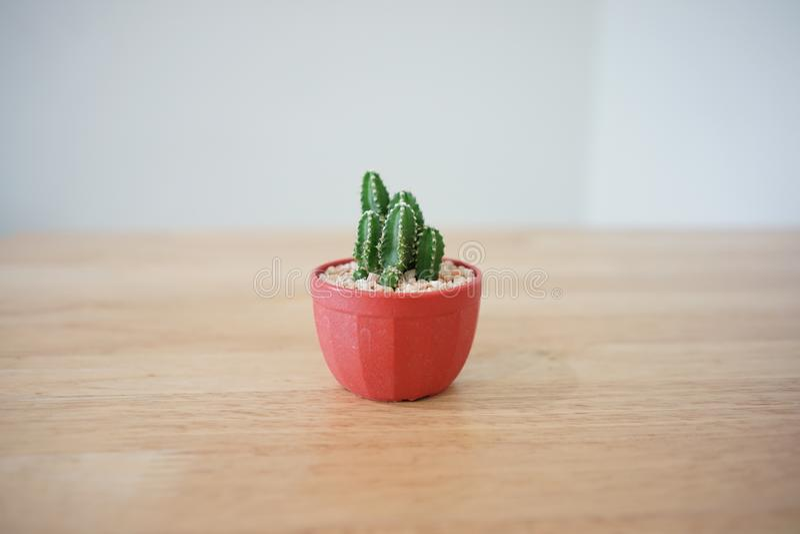 Cactus02 stock photos