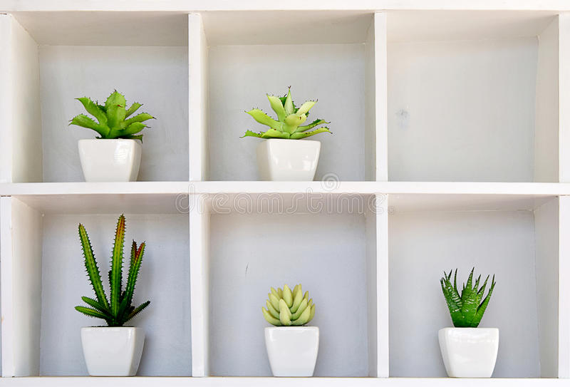 Cactus in pot on the shelf.  stock image