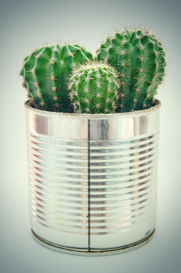 Cactus in POT fotografie stock libere da diritti
