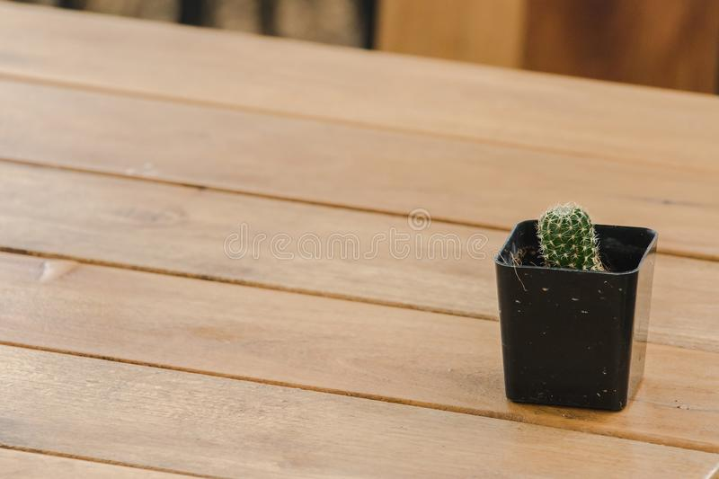Cactus in pots placed on a wooden table stock image