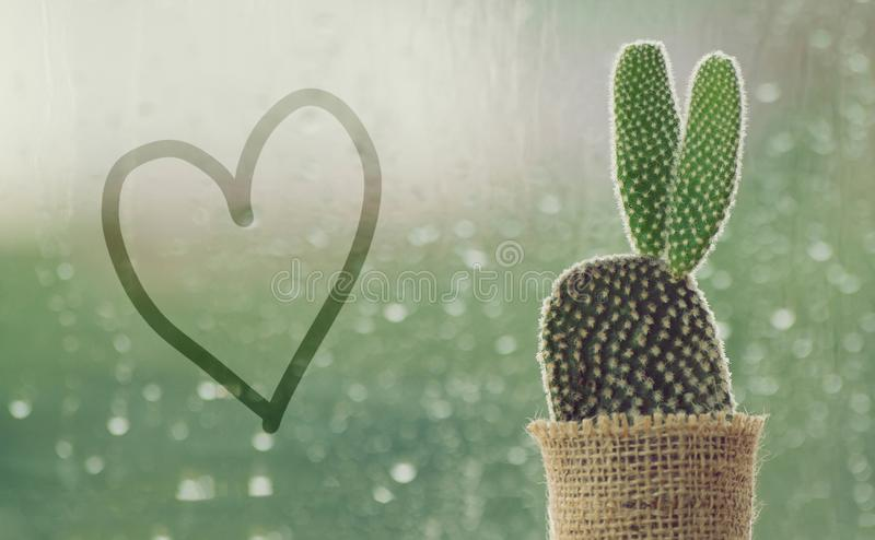 Cactus on a rainy day with handwriting heart shape on water drop at window background. drops of rain on window glass background royalty free stock photos