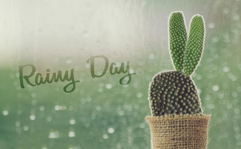 Cactus on a rainy day with water drop at window background. royalty free stock photos