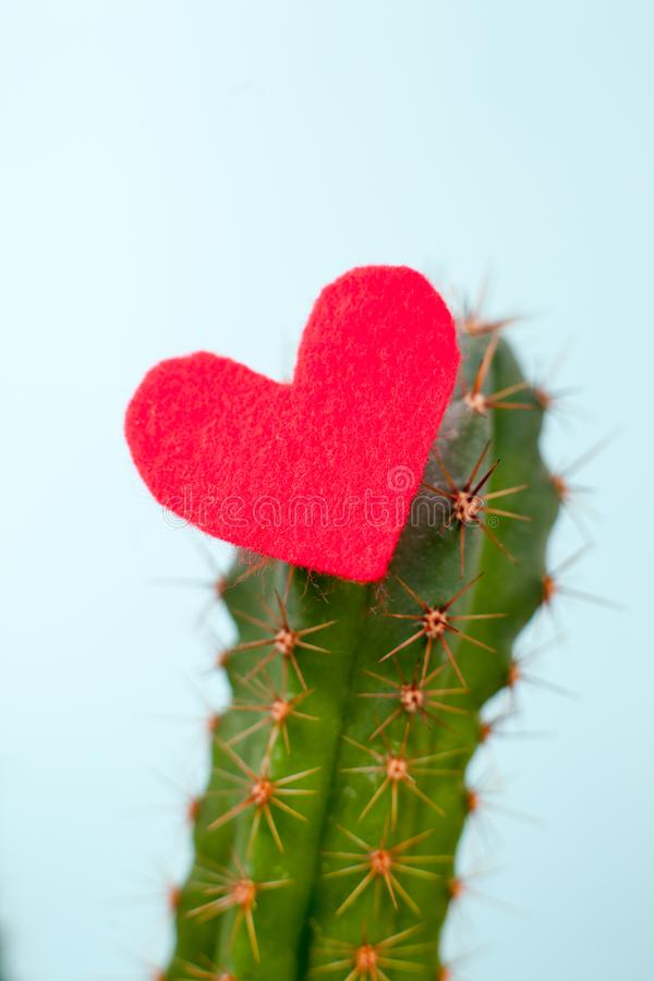 Cactus and red heart on it, the concept of contradictory feelings, cruel love, unapproachable heart. Minimalism, the ultimate. Cactus and red heart on it, the royalty free stock image