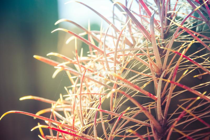 Cactus with Red Spikes royalty free stock image