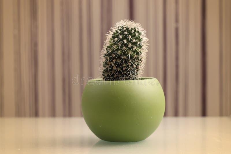 Cactus retro en pote fotos de archivo