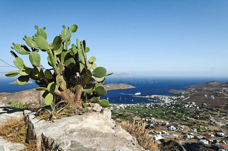 Cactus on rock. With Kythnos in the background. Greece stock images