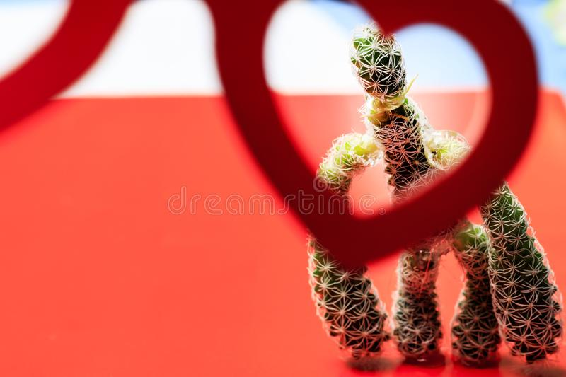 Cactus. through rose-colored glasses we look at him. Family relationship concept. Valentine love romantic heart thorn couple suffer sad shape symbol background royalty free stock image