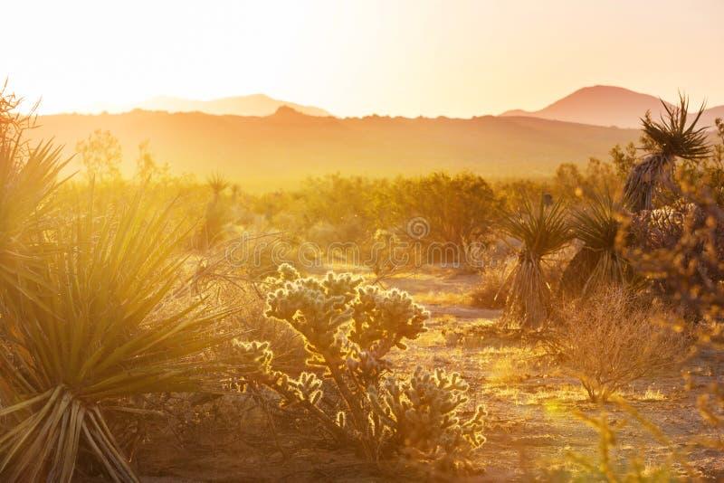 Cactus. Saguaro National Park stock images