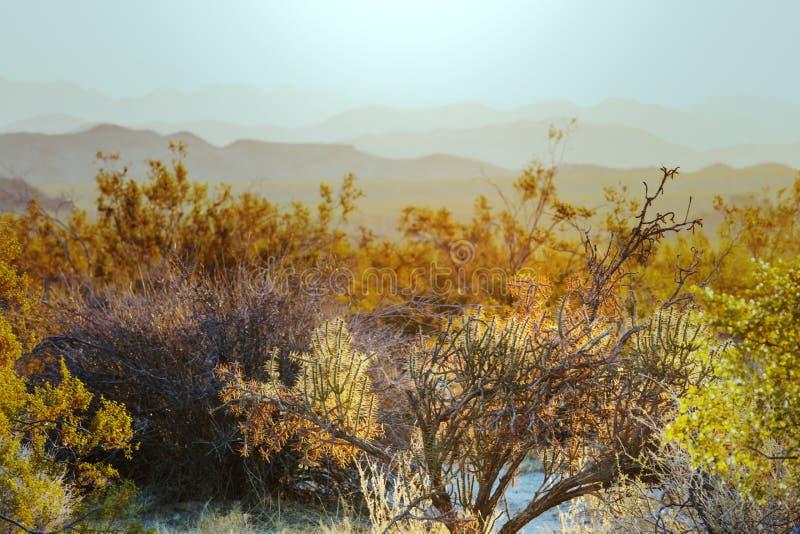 Cactus. Saguaro National Park, Arizona, USA royalty free stock photography