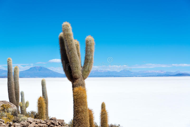 Download Cactus And Salt Stock Photo - Image: 43327427