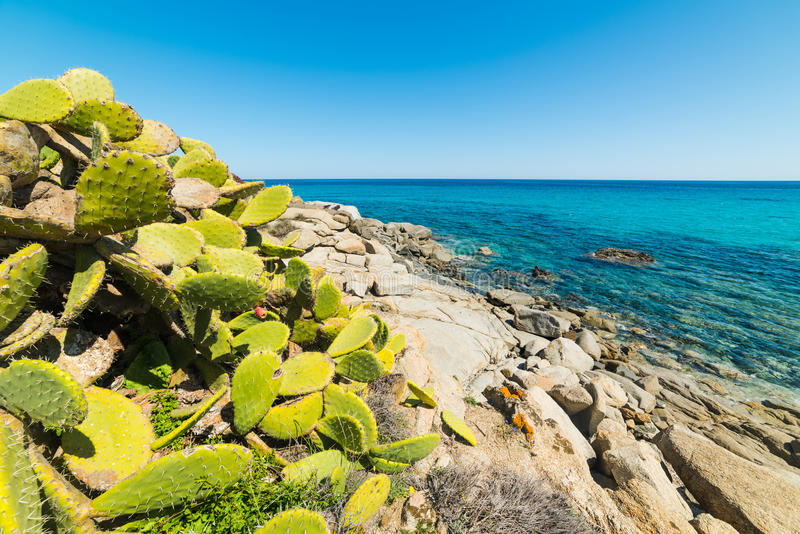 Cactus by the sea in Sant`Elmo beach stock photography