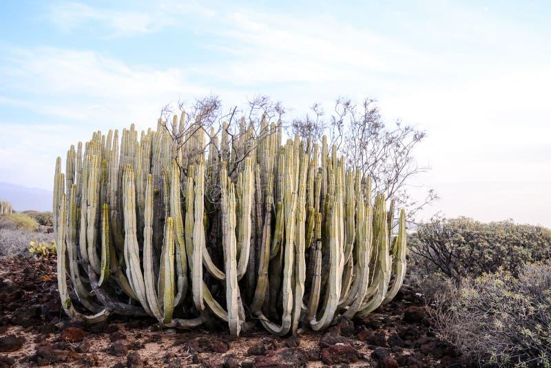 Cactus Seco Del Paisaje Del Desierto Foto de archivo Imagen de