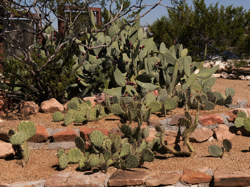 Cactus in Sedona in Arizona. To Sedona, a beautiful town amid stunning Red Rock Country. Browse its eclectic shops, feast on Southwestern cuisine, or just stock images