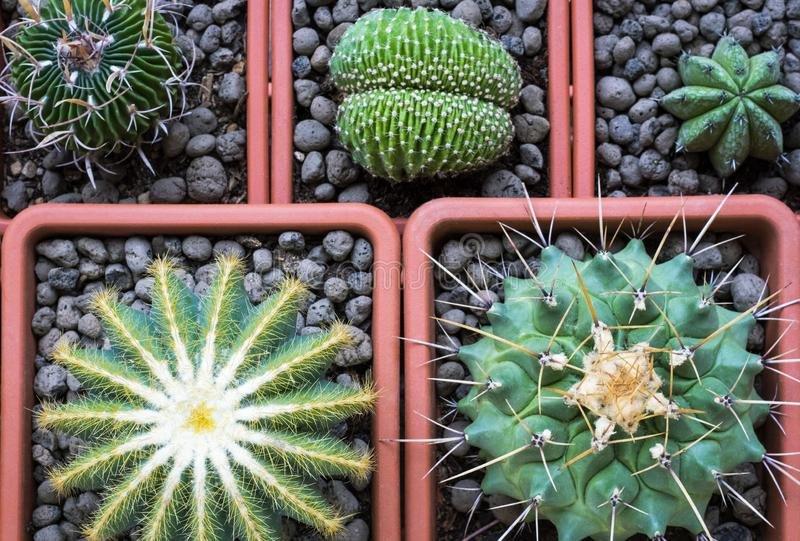 Little selection of cactus royalty free stock image