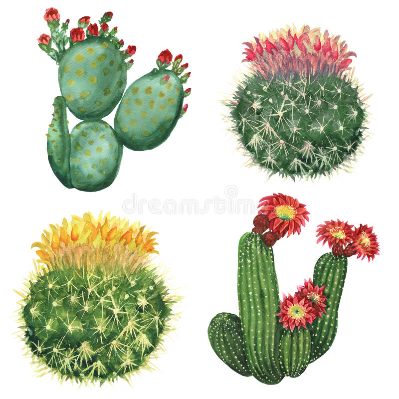 Cactus set royalty free illustration