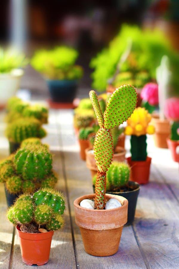 Cactus sierplanten in jardiniere met zo het slaan van kleur B royalty-vrije stock afbeeldingen