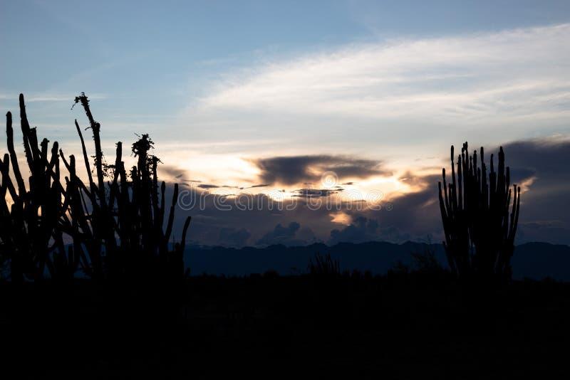 Cactus silhouette in evening at Tatacoa Desert. Cactus Silhouette in evening with clouds and sunset at Tatacoa Desert, Huila, Colombia royalty free stock image