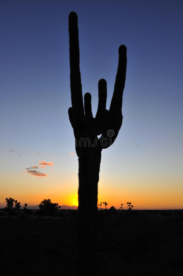 Cactus silhouette sunset, arizona, united states