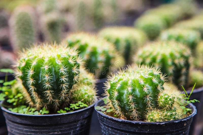 Download Cactus stock image. Image of thorn, spike, background - 39508903