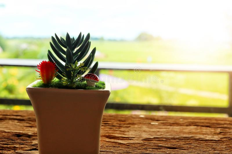 Cactus  In small pots  Placed on an old wooden table  Bokeh blur background from fields royalty free stock images