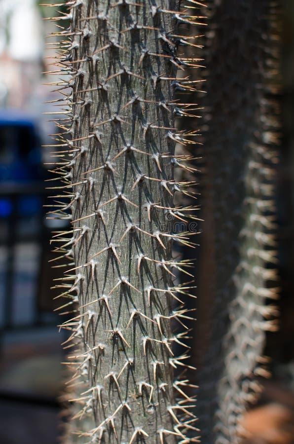 Cactus Specie Closeup Photo. royalty free stock photo