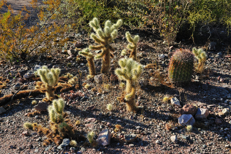 Download Cactus Species stock image. Image of varied, botanical - 8237273