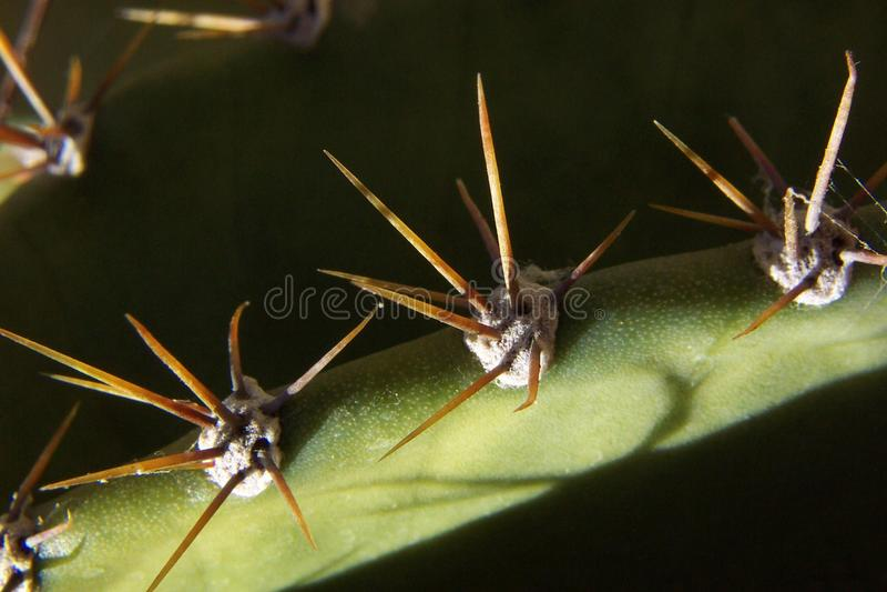 Cactus Spikes Stock Photos