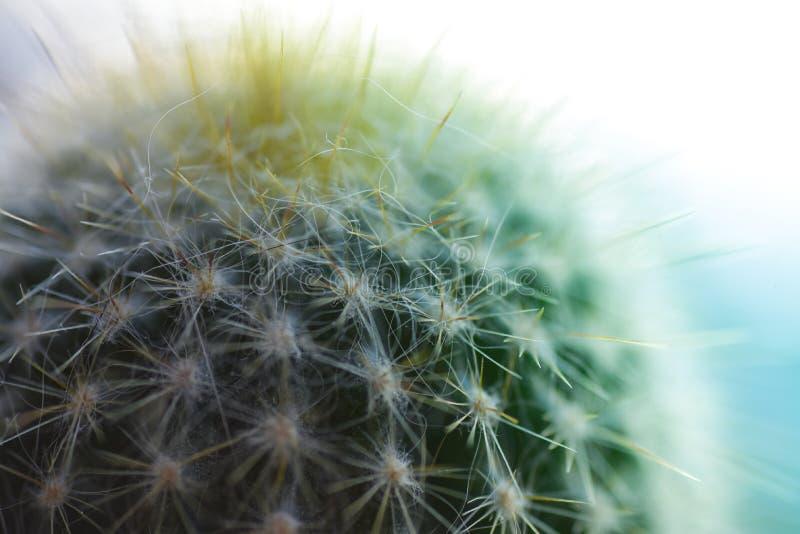 Cactus spinoso, fine sul macro colpo verde fotografie stock libere da diritti
