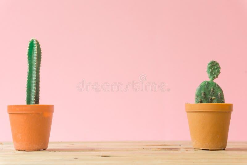 Cactus Stillife creativo mínimo en fondo en colores pastel rosado fotografía de archivo libre de regalías
