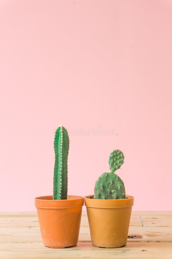 Cactus Stillife creativo minimo su fondo pastello rosa fotografia stock