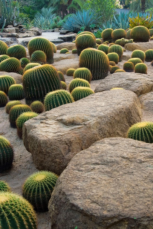 Cactus and stone Garden stock photo
