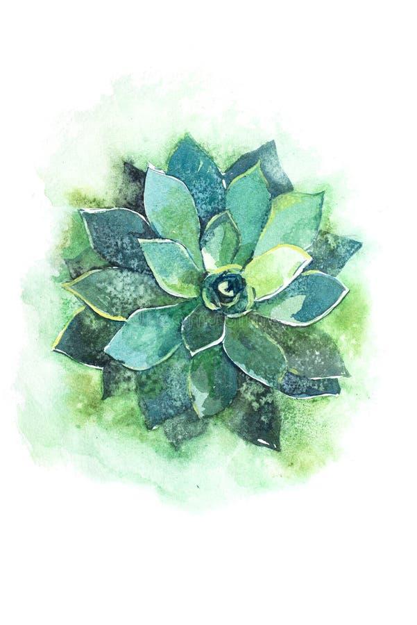 Cactus succulent aloe plant flower watercolor illustration. Cactus succulent aloe plant flower watercolor illustration royalty free illustration