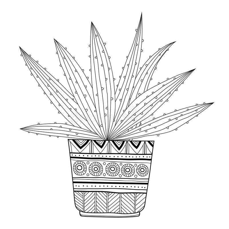succulent coloring page - cactus succulent black and white illustration for