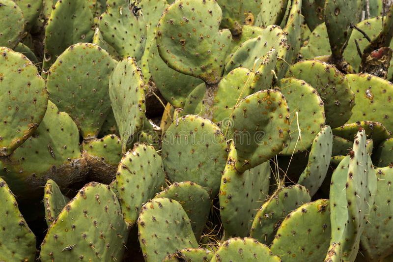 Cactus and succulents. Amazing and interesting cacti and succulents royalty free stock photography