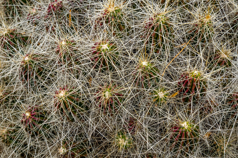Cactus and succulents. Amazing and interesting cacti and succulents royalty free stock photo