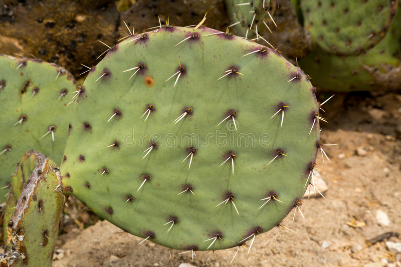 Cactus and succulents. Amazing and interesting cacti and succulents stock image
