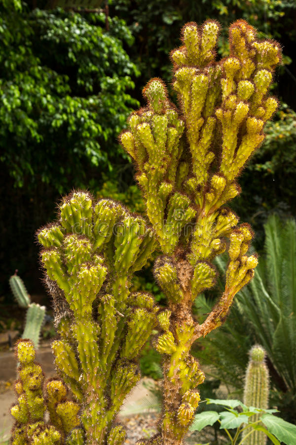 Cactus and succulents. Amazing and interesting cacti and succulents royalty free stock image