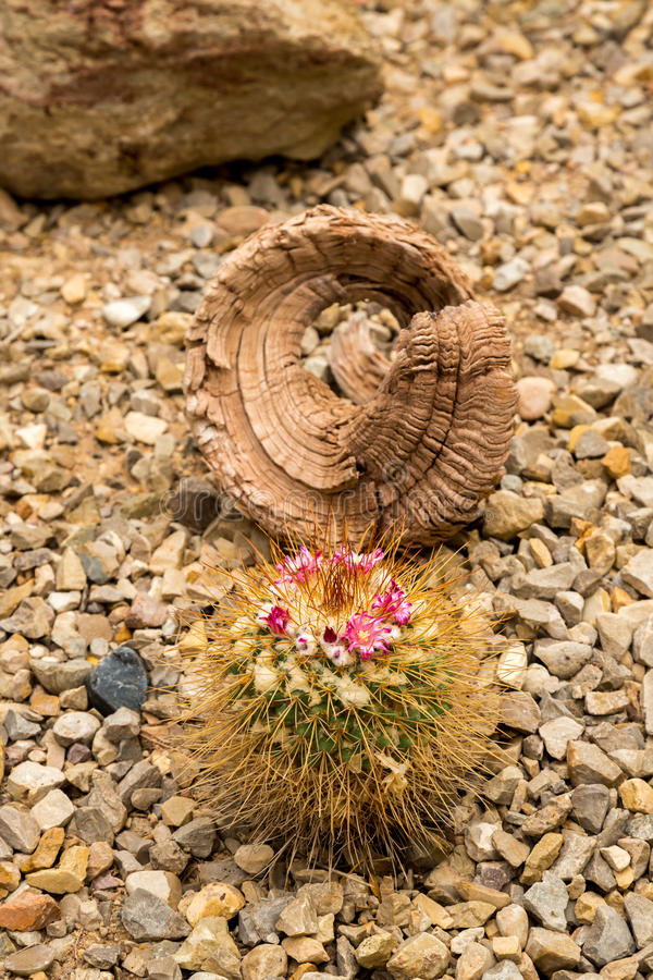 Cactus and succulents. Amazing and interesting cacti and succulents stock photography