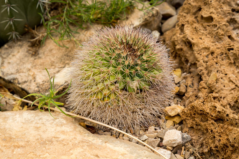 Cactus and succulents. Amazing and interesting cacti and succulents royalty free stock images