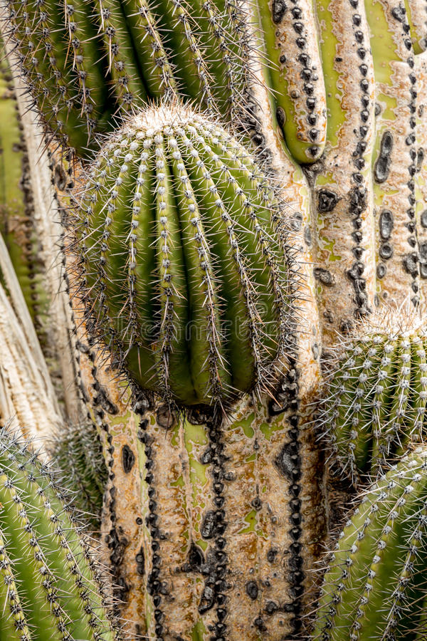 Cactus and succulents stock image
