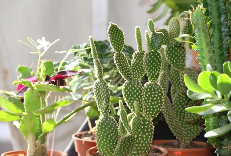 Cactus and succulents royalty free stock image
