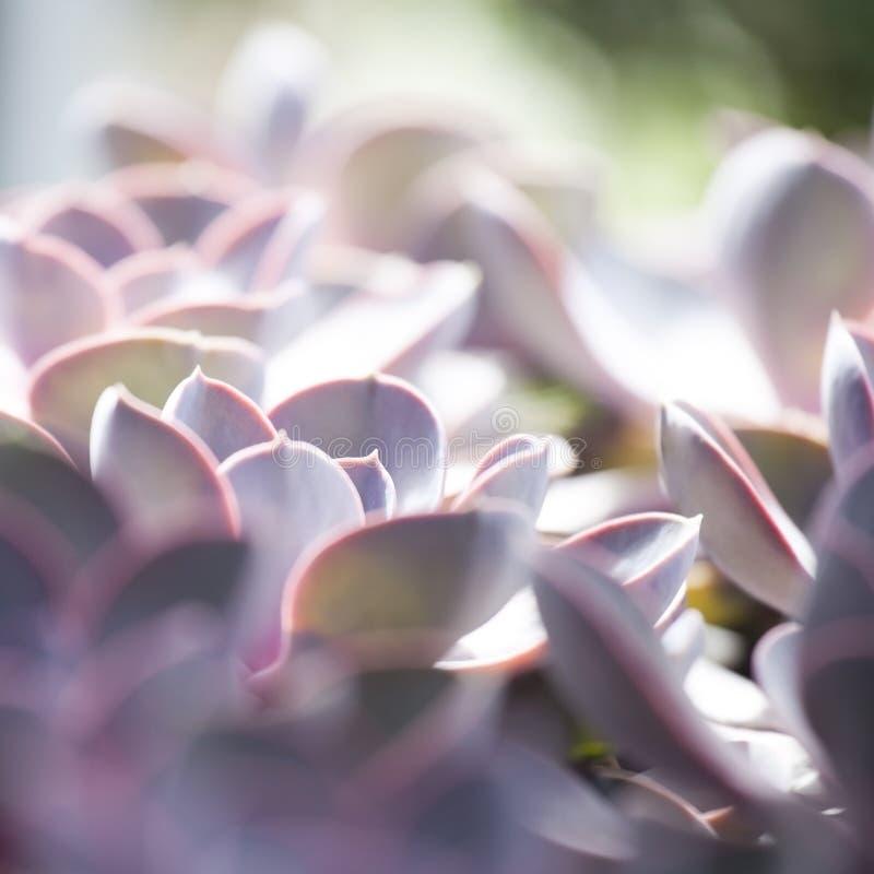 Cactus succulents in een planter stock afbeelding