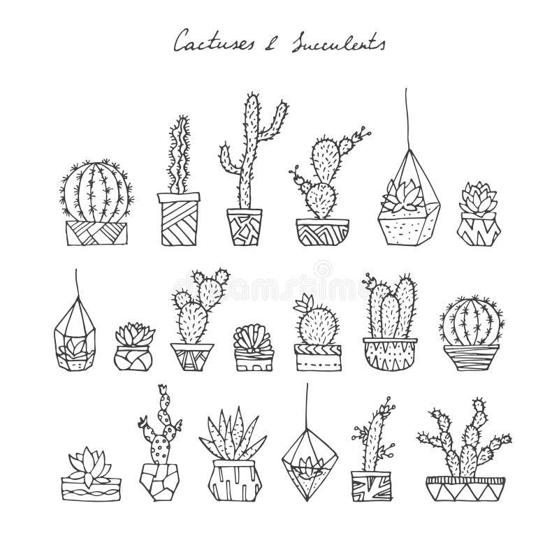 Cactus, succulents fijados ilustración del vector