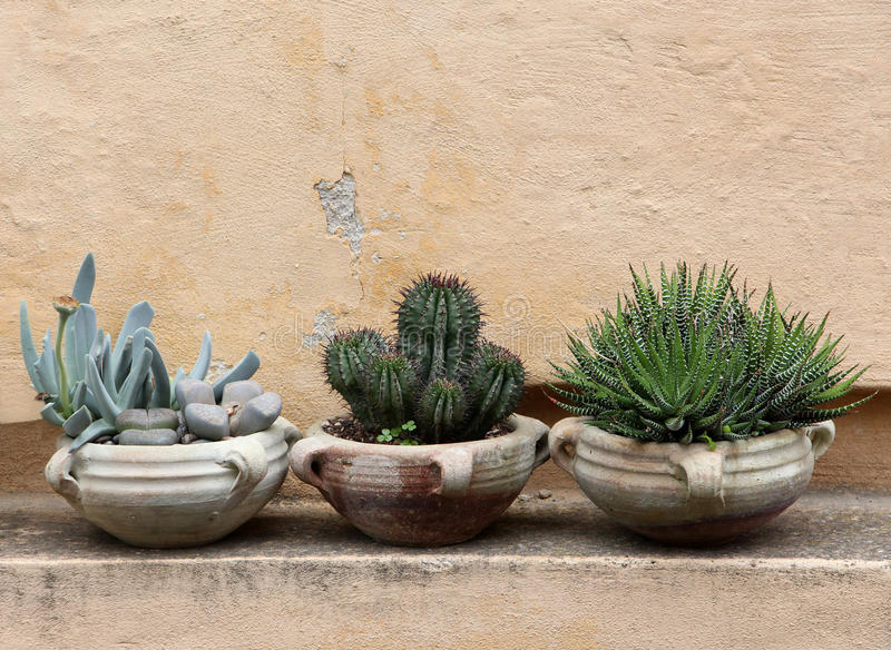 Cactus and succulents in terracotta jars royalty free stock images