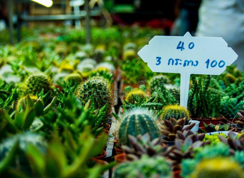 Cactus Sugar palm leaf stock image