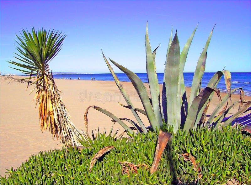 Cactus sulla spiaggia fotografie stock