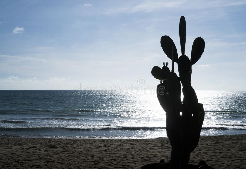 Cactus sulla spiaggia sabbiosa sopra il mare ed il cielo immagine stock
