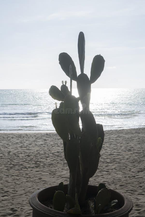 Cactus sulla spiaggia sabbiosa sopra il mare ed il cielo fotografie stock