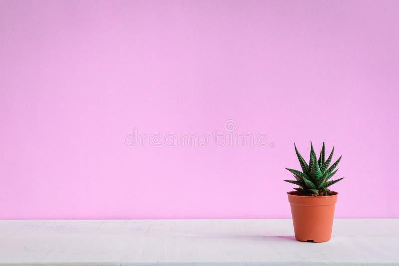 Cactus sullo scrittorio con le pareti rosa dolci fotografia stock libera da diritti